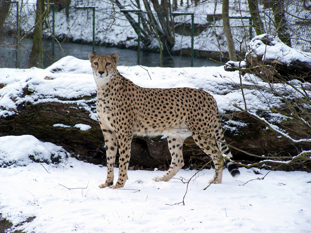 zwierzęta zimą