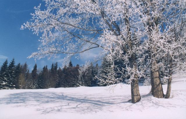W oczekiwaniu na śnieg